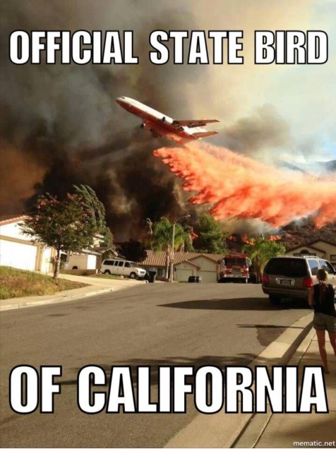California-State-Bird